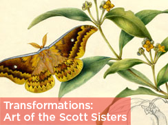 TRANSFORMATIONS: THE ART OF THE SCOTT SISTERS
