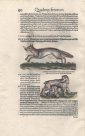 Page 90 from Icones Animalium
