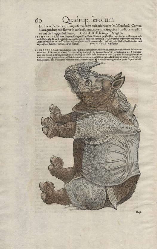 Rhinoceros from Icones Animalium