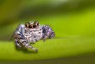 Watchful Eyes of a Bearded Spider - Louis Tsai
