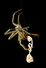 Spider with parasitic worm - Michael Williams