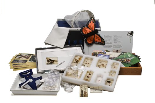 Museum in a box - Insects