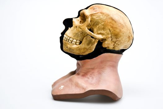 Neanderthal head reconstruction side view