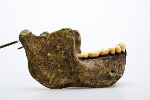 Mauer jaw Homo heidelbergensis side view