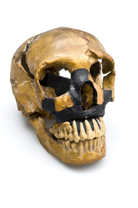 Le Moustier Homo neanderthalensis skull angled view