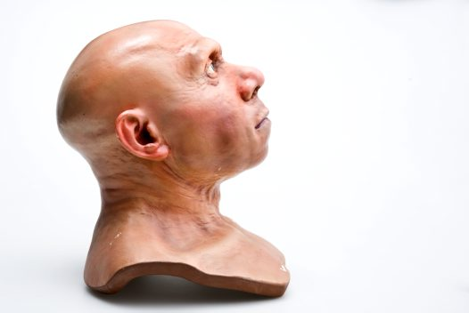 Neanderthal head flesh reconstruction side view