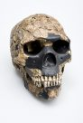 Skhul 5 skull Homo sapiens front view