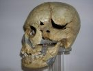 Skull of Homo sapiens Minatogawa 1 side view