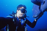 Diver and Eastern Blue Groper