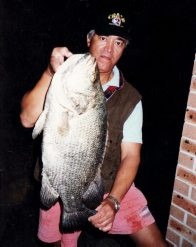Tripletail from the Georges River