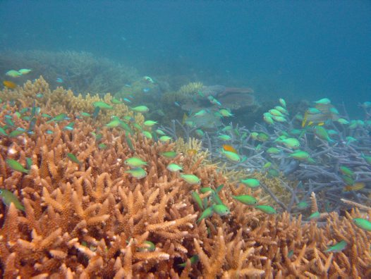 Corals and fish, Lizard Island