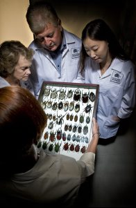 Behind The Scenes in the Entomology Collection