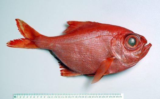 Fish%2001_big.jpg