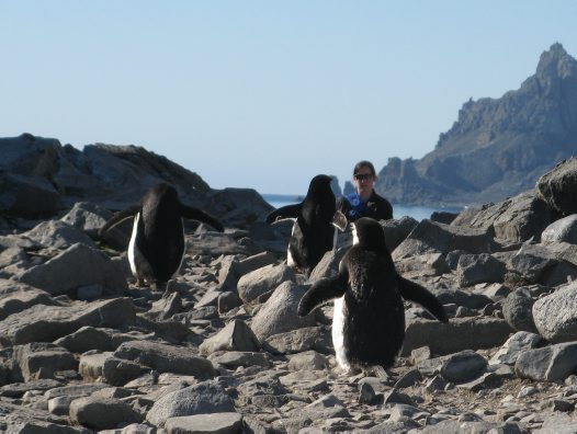 AM Members Trip: Wildlife in Antarctica