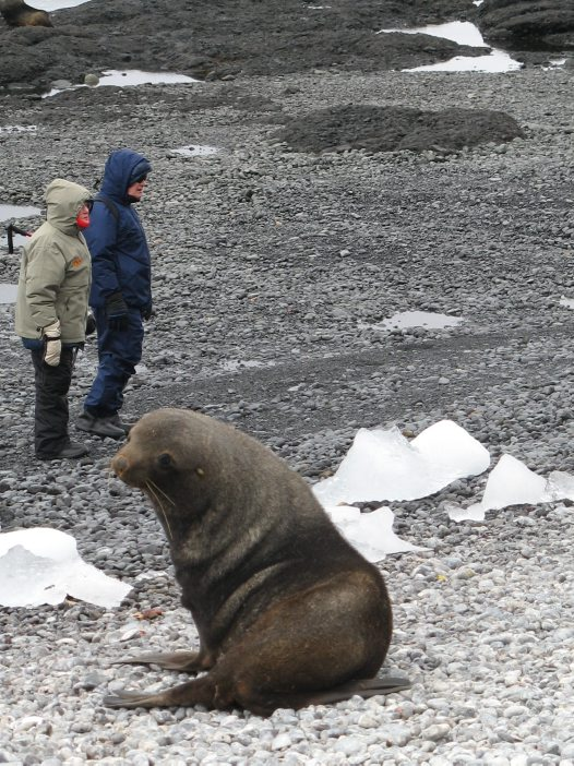 AM Members Trip to Antarctica: Seal