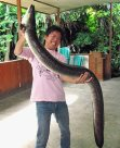 Giant Mottled Eel caught in Poso Lake