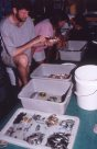 Identifying fishes - Solomon Islands 1998