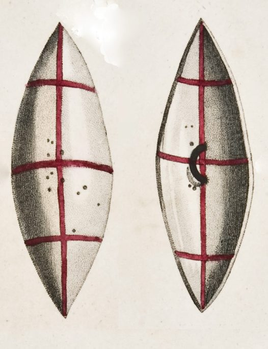 Aboriginal shield illustrated by C A Lesueur