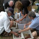 Central Coast, New South Wales - Sorting the catch