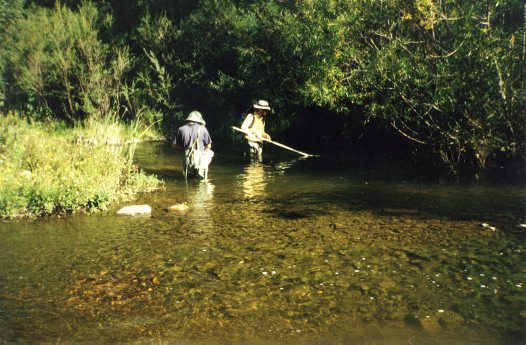 Coxs River - Backpack Electrofishing