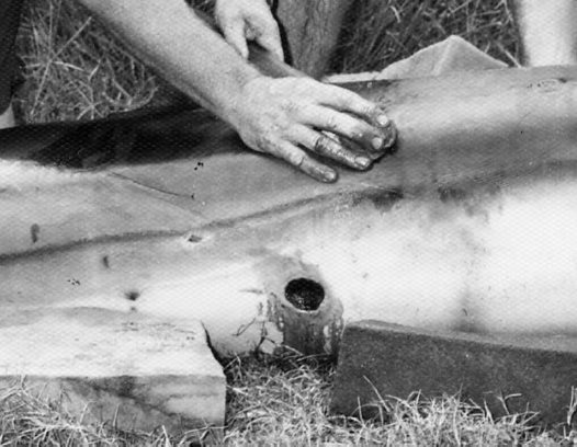 Fraser's Dolphin wounded by a Cookiecutter Shark