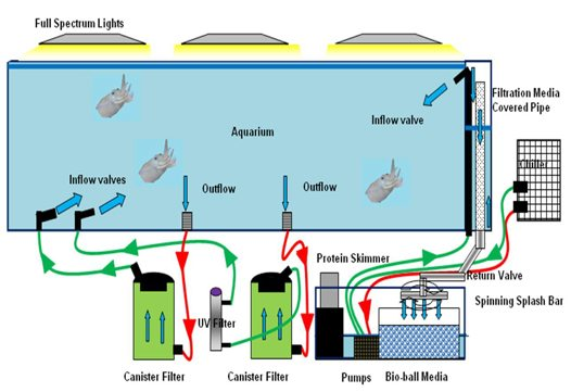 Fish tank filters diagram fish free engine image for for Fish filter system