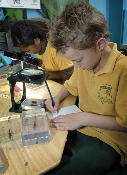 Primary student using magnifying glass