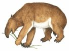 Australia's extinct animals: illustrations