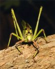 Katydid - Narelle Power