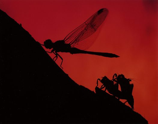 Dragonfly Sunrise - Andrew Davoll