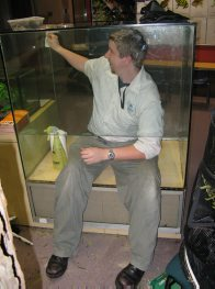 Cleaning the phasmid enclosure in Search & Discover