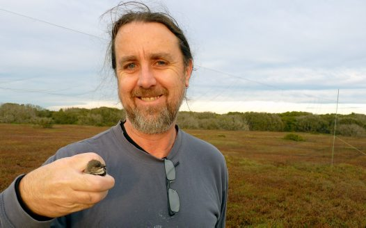 DNA Lab - Andrew with captured White-Fronted Chat