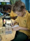 Student exploring embedded insects