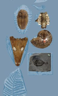 Fossil Collection