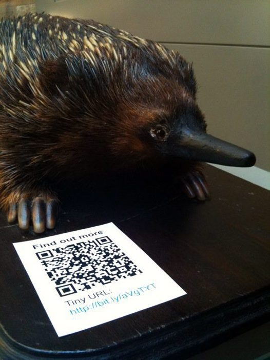 Echidna and QR Code