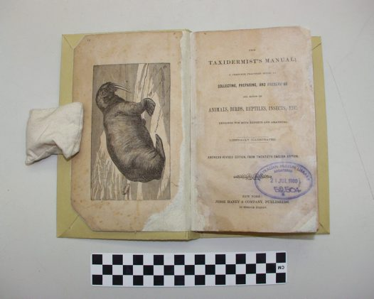 Taxidermist's Manual - restored pages after treatment