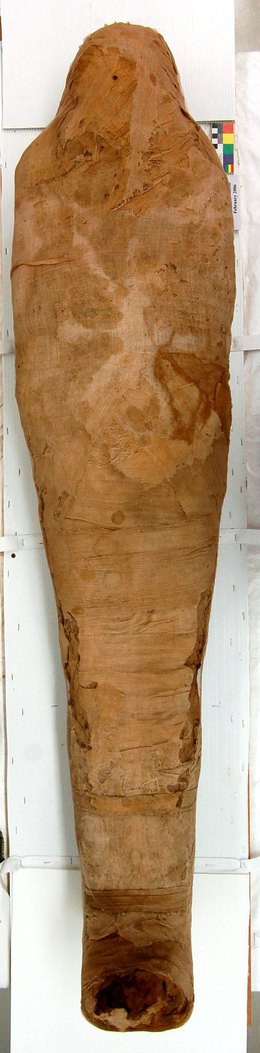 The museum mummy after treatment