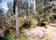 Sandstone Woodland habitat - Example of spiders habitat