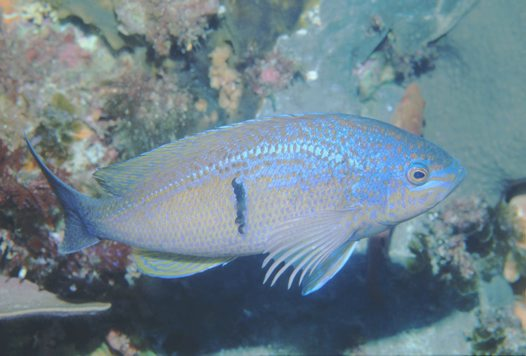 Lateral view of a Barber Perch