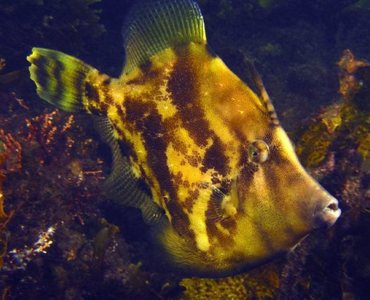 Fanbelly Leatherjacket under Swansea bridge