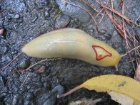 Red Triangle Slug #2