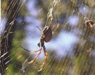 Sunlight on the…..Spider? - Thomas Pegler