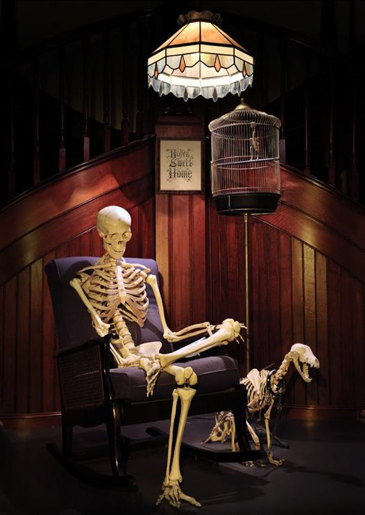 Skeleton Gallery - rocking chair
