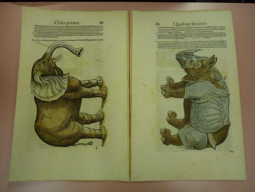 Icones Animalium
