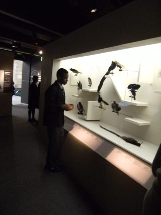 Students in the Birds of Paradise exhibition