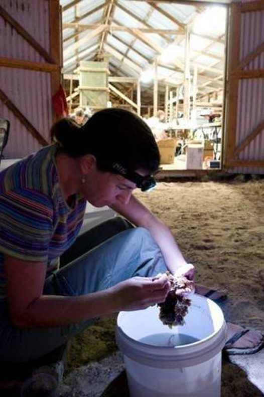 Sorting specimen at Ningaloo Reef
