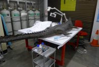 Crocodile restoration