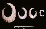 Shell fishhooks from NSW central and south coasts