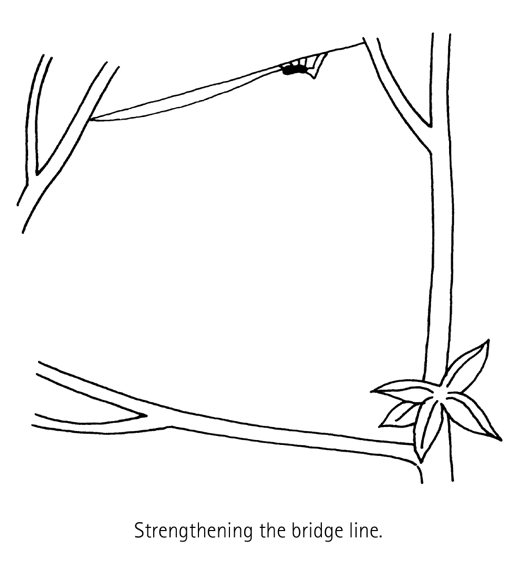 Spider Building a Web Diagram 2