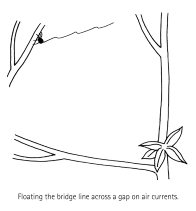 Spider Building a Web Diagram 1